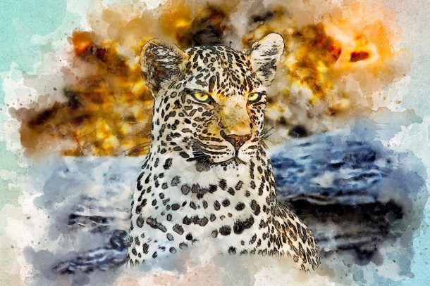 Leopard: Animal Spirit Guide