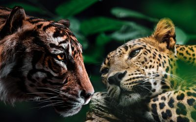 Leopard and Tiger: Your Animal Spirit Guides at the Full Moon in Libra on March 28, 2021