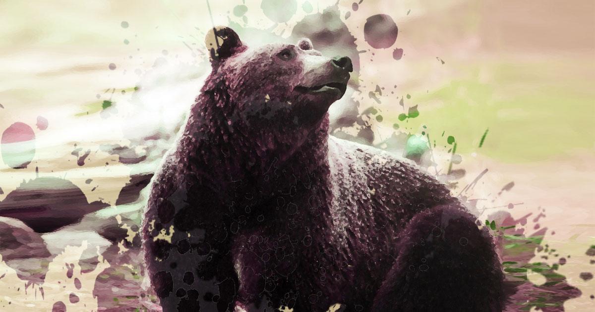 Bear Animal Spirit Guide