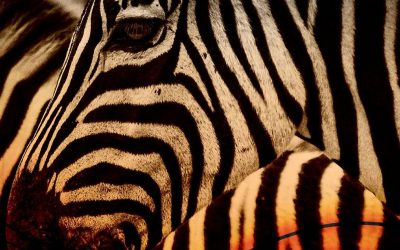Zebra, Seagull and Gorilla: Your Animal Spirit Guides at the New Moon in Aries on April 11, 2021
