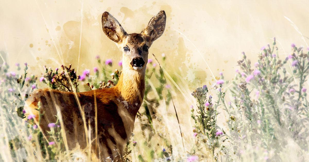 Deer as your Animal Spirit Guide