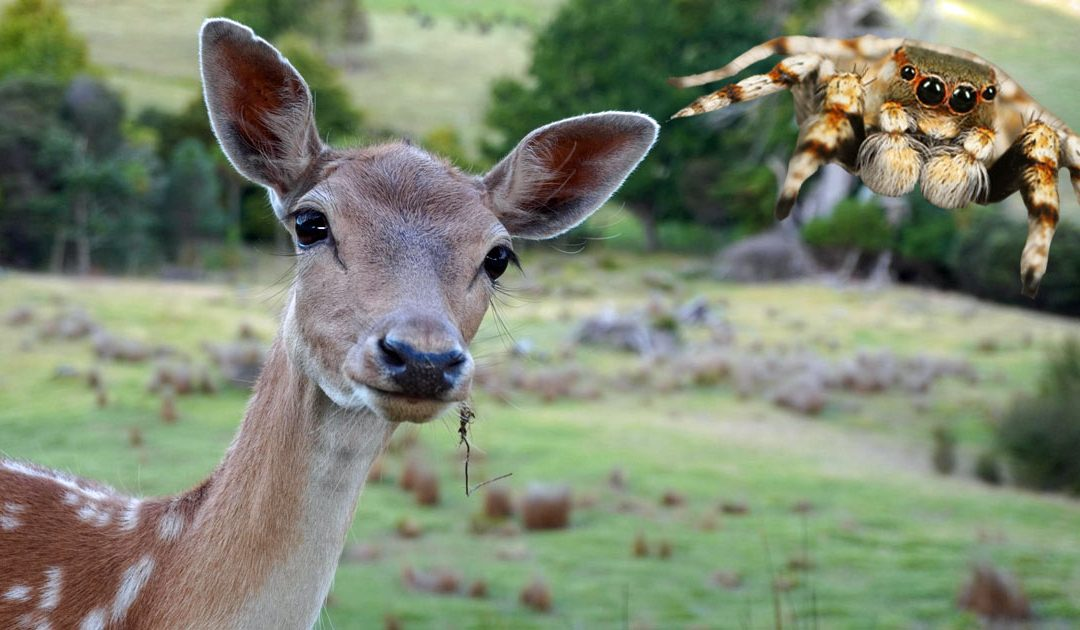 Deer and Spider: Your Animal Spirit Guides for the Full Moon in Sagittarius on May 26, 2021