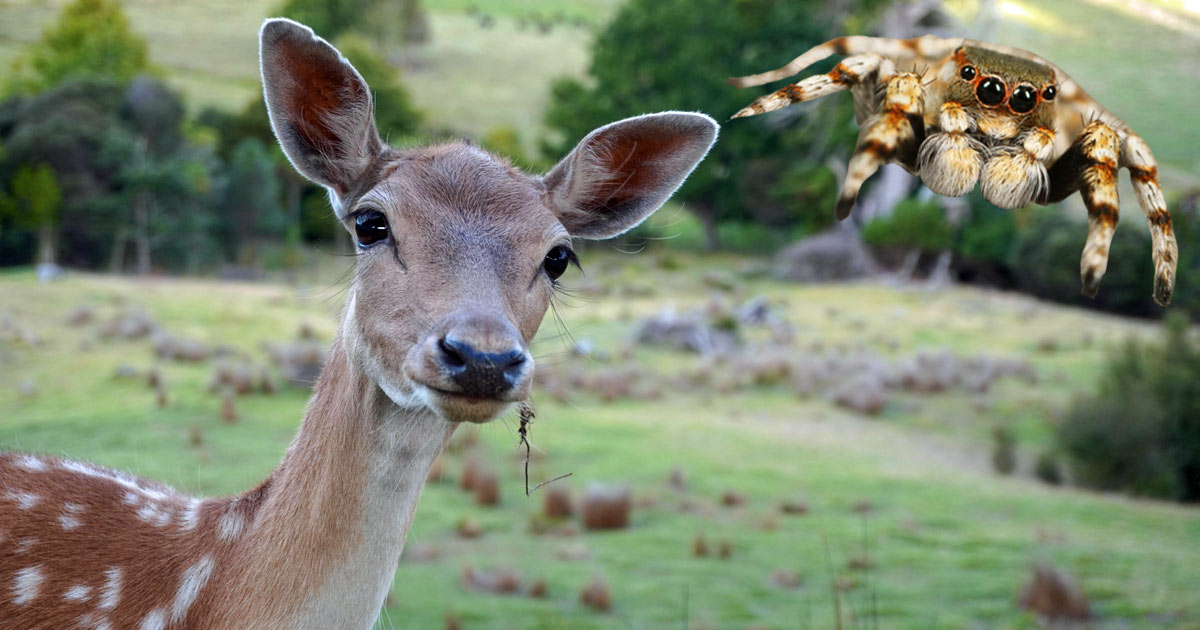 Deer and Spider: Your Animal Spirit Guides