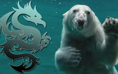 Polar Bear and Dragon: Your Animal Spirit Guides for the New Moon in Taurus on May 11, 2021
