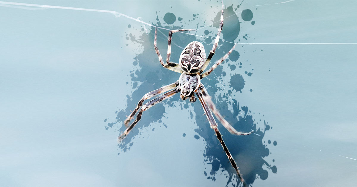Spider as your Animal Spirit Guide
